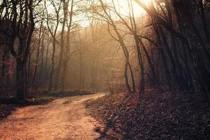 voetpad in het bos foto