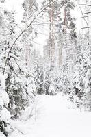 Russische winter bos in de sneeuw