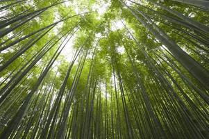 uitzicht op het bamboebos