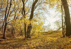 wandeling in het herfstbos foto