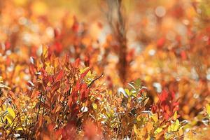 achtergrond geel herfst bos mos foto