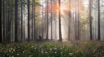 magisch Karpatenbos bij dageraad foto