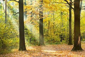 zon verlicht gazon in herfst bos foto