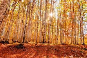 bos in de herfst in montenegro foto