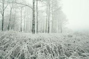 ijzig winterlandschap in besneeuwde bossen