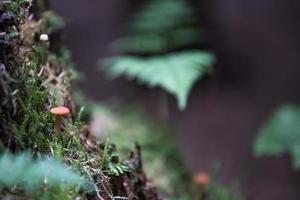 eerste herfstpaddestoel in het bos foto