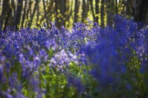 bomen en bloemen in een bos foto