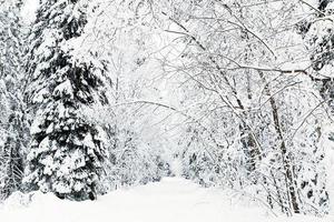 Russische winter bosweg in de sneeuw