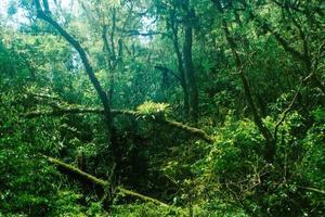 casal de bromélias namorando escondidas in floresta. foto