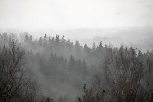 panoramisch uitzicht op mistig regenwoud foto