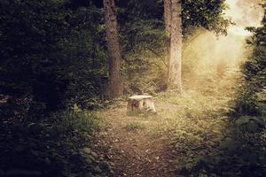 boomstam bij eng glanzend bos foto