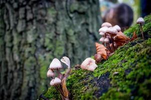 paddestoel in de herfst in het bos foto