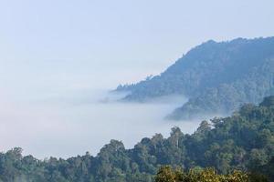 zee van mist met bossen als voorgrond foto