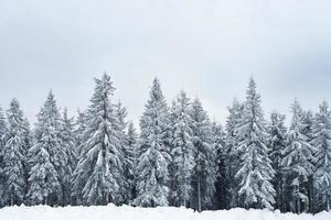 dennenbos in koude grijze winterdag foto