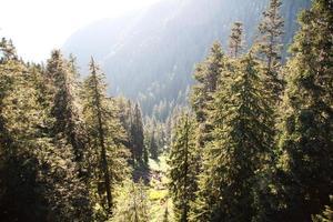 open plek in het bos foto
