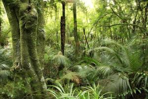 boom in het bos foto
