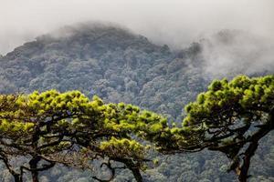 dennenbos met bergen en regenachtige mist foto