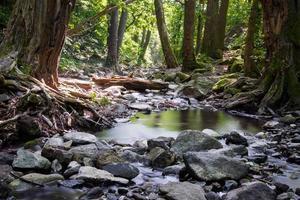bos in de zomer foto