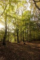 voetpad in de herfst in het bos foto