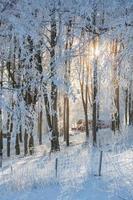 zonneschijn in het bos foto