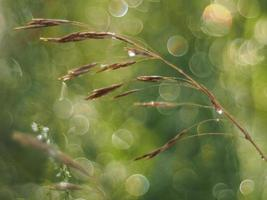 planten in het bos foto