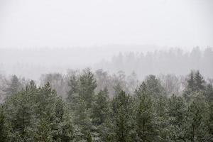 panoramisch uitzicht op mistig bos foto