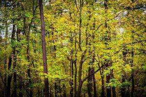 vroege herfstkleuren in een bos.