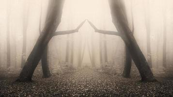 magische symmetrie in mistig bos foto