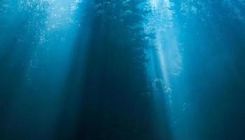 mysterieus bos in de mist foto