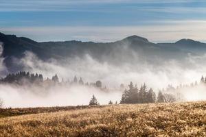 mist die de bergbossen bedekt foto