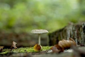 witte paddestoel groeit op een herfst bos foto