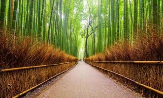 pad naar bamboebos, arashiyama, kyoto, japan foto