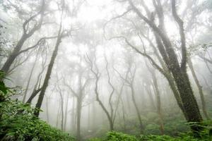 boombos in de herfstseizoen van Thailand