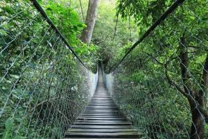 hangende brug in een regenwoud, guatemala foto