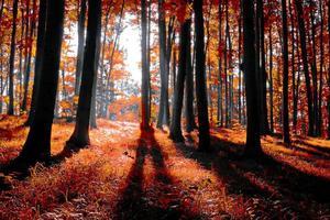 herfst bos foto