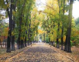 prachtige herfst bos in nationaal park foto