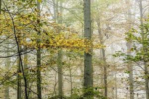 detail van bomen in mistig bos