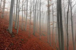 herfstdag in het betoverde bos