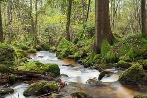 waterval in het bos foto