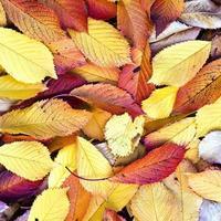 herfstbladeren liggen in het vervaagde gebladerte