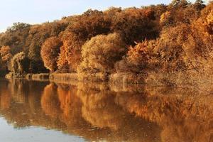 herfst bos in de weerspiegeling van water