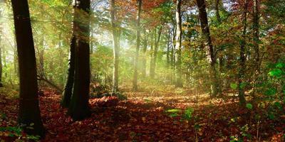 herfst bos met zonnestralen foto