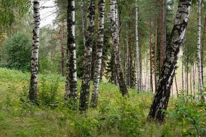 bosweg met zonnestralen foto