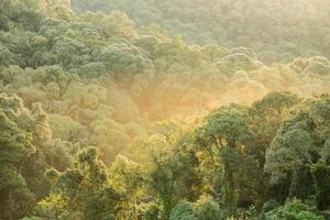 tropisch regenwoud met ochtendlicht foto