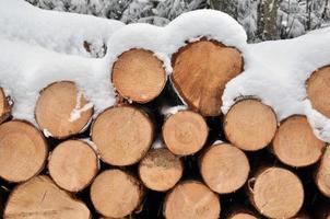 sneeuw op de houtstapel foto