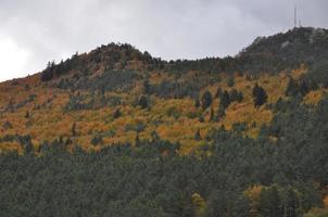otoño en los bosques de las montañas de navarra foto