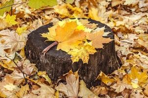 achtergrond van kleurrijke herfstbladeren op bosbodem