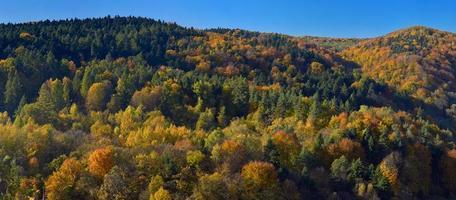 panorama van de herfstbos in het nationale park van ojcow. foto