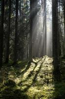 bosweg met zonnestralen in de ochtend foto
