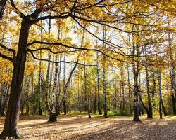 weide in eiken- en berkenbos in de herfst foto